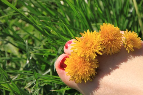 Barefoot-In-Grass_Yellow-Flowers-Between-Toes__2546IMG_5226-480x320