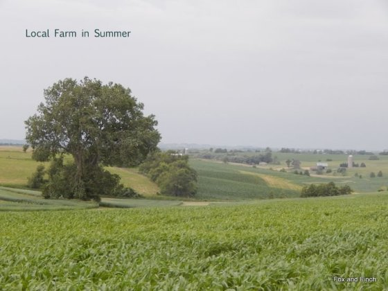 1-farm-in-summer