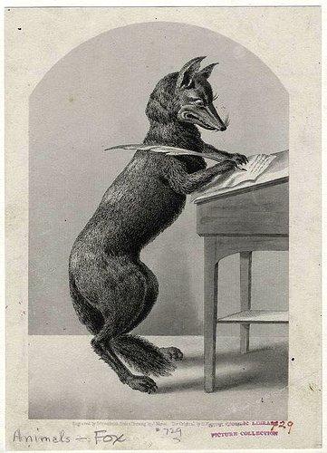1-foxwriter